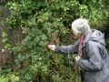 db_jane_picking_blackberries_for_breakfast1